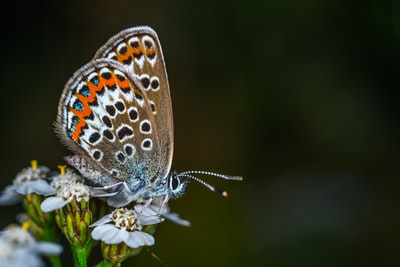 What you need to know about Butterfly photography